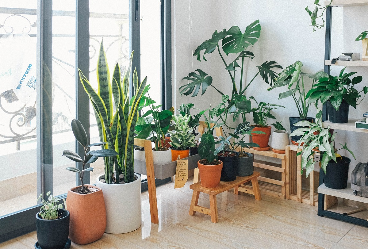 potted green indoor plants in a window